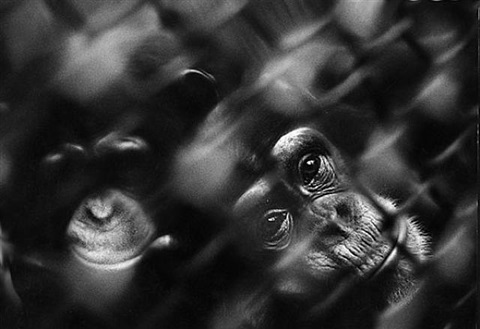 unknown zoo by chris marker