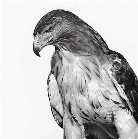 one-eyed hawk (blind side), new jersey by neil selkirk