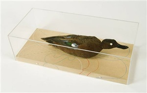 untitled (wood duck, connecticut) by james prosek