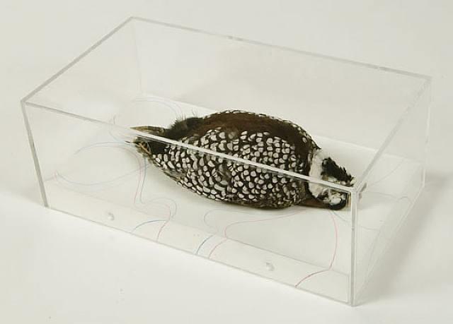 untitled (montezuma quail, arizona) by james prosek