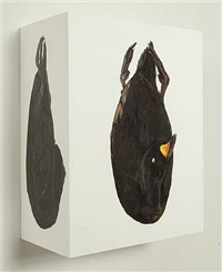 untitled (black scoter, rhode island) by james prosek