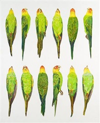 untitled (carolina parakeets) by james prosek