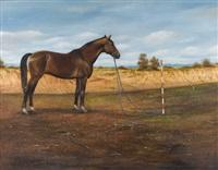 horse portrait by zoran nastic
