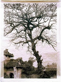 temple tree, vietnam by meridel rubenstein