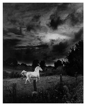 stormy by bill eppridge