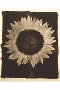 sunflower #1 by hiromitsu morimoto