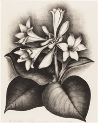 plantation lily by verda ligon