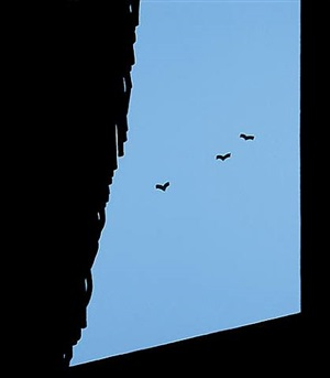 a ah! this life is so everyday by patrick caulfield