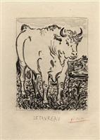 le taureau by pablo picasso