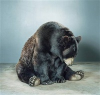 untitled (ursine) by jill greenberg