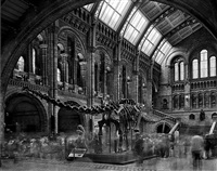 diplodocus #2, natural history museum, london, 2007 by matthew pillsbury