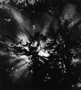 sunburst, hawaii by brett weston