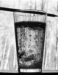 growing sugar crystals by david goldes
