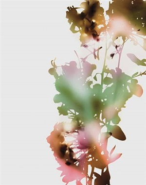 001, e+b (from flowers) by james welling