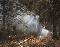 understory flareups, fourth of july creek, valley road wildfire, custer county, idaho by laura mcphee