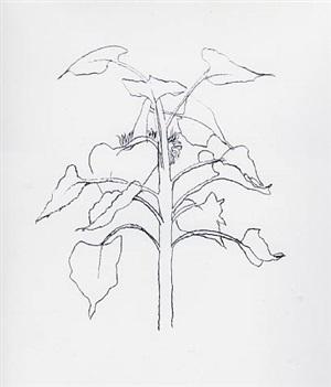 sunflower i by ellsworth kelly