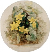 marsh marigold by john henry hill