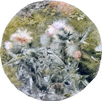 thistles by john william hill