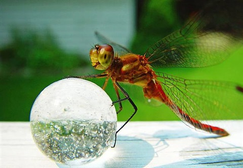 dragonfly, june 23, 2002 by peter m. wach