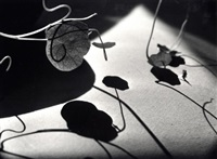 leaves and shadows, vienna by ernst haas