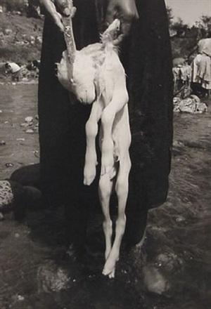 the sacrifice / el sacrificio by graciela iturbide