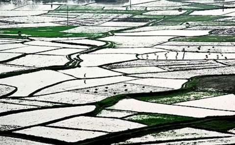 man in rice paddies, china by stephen wilkes