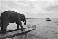 a stunt elephant, honky tonk freeway, sarasota, florida by mary ellen mark