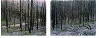 untitled, sawtooth valley idaho (diptych) by laura mcphee