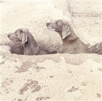trench by william wegman