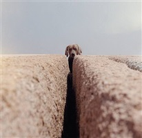 divide by william wegman