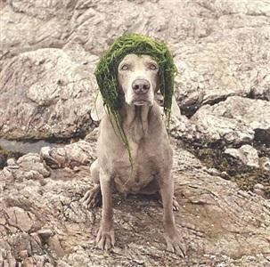 algae girl by william wegman