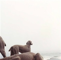 ocean view by william wegman