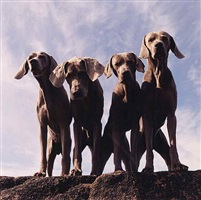 4 up by william wegman