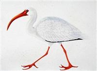 white ibis by scott kelley