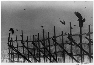 nayoro (from the series solitude of ravens) by masahisa fukase