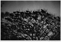 kanazawa (from the series solitude of ravens) by masahisa fukase