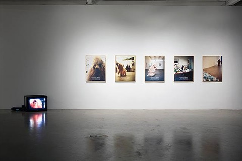 direktor pudel (installation view) by christian jankowski