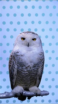 snow owl by robert wilson