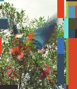 sergio vega parrot theory by sergio vega
