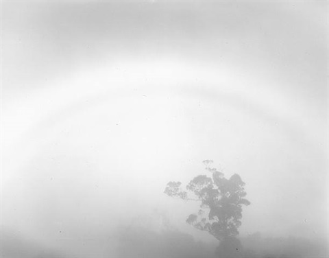 tree mist, pale rainbow, kauai by don worth