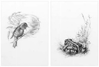 nightingale to a toad (two works) by mark leithauser