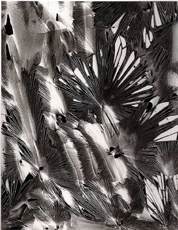 cracked paint, garrapata by brett weston