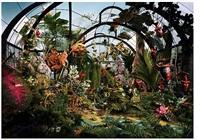 botanical garden by lori nix