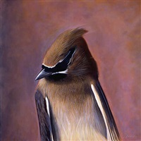 cedar waxwing by kate breakey