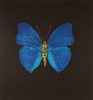 the souls on jacob's ladder take their flight (blue with red antennae) by damien hirst