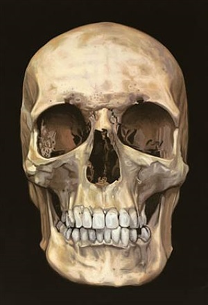 the skull beneath the skin by damien hirst