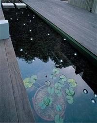 100 time lotus by tatsuo miyajima