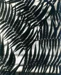 fern abstraction by edward w. quigley