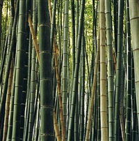 bamboo by claudia terstappen
