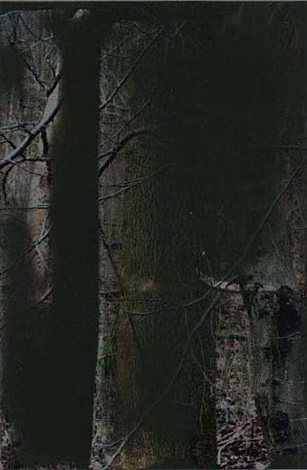 wald by gerhard richter